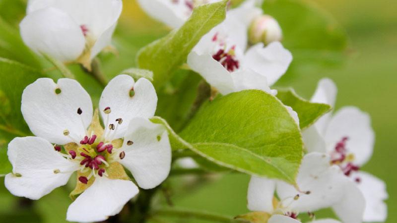 Incredible-Edible-blossom-800-x-450